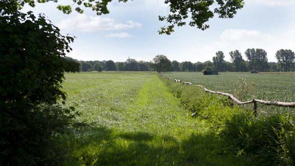 Umgebung von Haus Schnede in der Lüneburger Heide